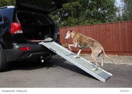 Auf keinen fall sollte dein liebling auf den treppen springen. Treppenhilfen Fur Hunde Gibt Es Mehr Ausser Rampen Haustiermagazin