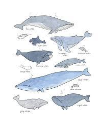 Whale Print Nautical Nursery Whale Decor Wall Art Whale