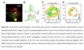 Formation Motion Design A Distance 3 9 Myriad Roles For Gap Junctions In Retinal Circuits By