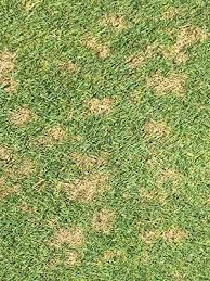 Ohio States Disease Day Helps Turf Managers Id Problems And