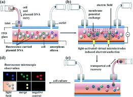 Dielectrophoretically Assisted Electroporation Using Light Activated