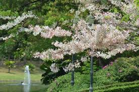 10 small trees for your garden small