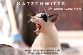 Katzenwitze Die Besten Witze Ever Die Katzenfreundewelt