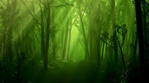 dark forest wallpaper 1920x1080.  1920x1080 Awesome Dark Forest Wallpaper For 1920x1080 T