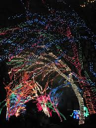 Christmas Lights At Potter Park Zoo Gary Jackson Fire When Ready Pottery