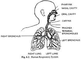 essay on air pollution meaning sources and effects human respiratory system