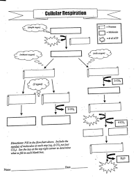 Unit 4 Flow Chart Have To Know Biology Regulars Diagram
