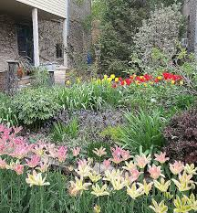 spring bulb garden layout garden designs fresh spring bulb garden desi nantes