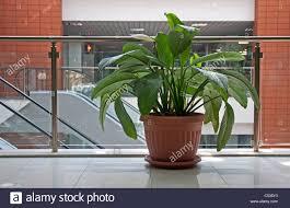 office pot plants. Cool Office Design Plants Flower Pot Durban: Large Size E
