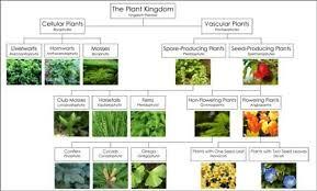 Plant Kingdom Classification Chart For Kids Plant Classification Chart Blogmontessori For Everyone