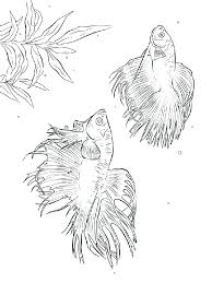 Betta Fish Coloring Page K3727 Fish Coloring Pages Download And