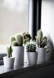 Small Picture 40 ideas para jardines de cocina con plantas suculentas Cacti