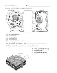 easy plant and animal cell worksheet workkids animal cell coloring page animal cell diagram coloring