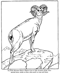 Small Picture Coloring Pages Of Big Animals Coloring Coloring Pages