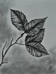 realistic leaves drawing google search