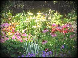 flower garden designs. Full Size Of Garden Simple Wildflower Design Ideas With Small Flower Tips In Designs Shade And