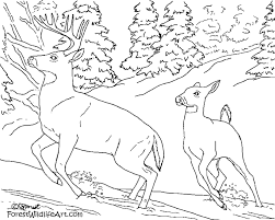 Small Picture Wildlife Coloring Pages At glumme