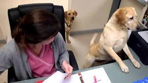 Dog Receipt Dog Gives Receipt Part 2 Youtube