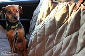 luna can t wait for our next car trip with our new solvit deluxe hammock seat cover