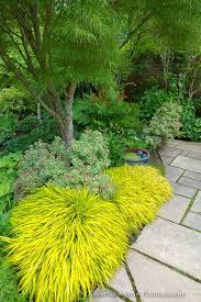 Shade plants - Vashon Island, WA: Japanese forest grass (Hakonechloa macra  'All Gold') lights up a shadel garden featuring pieris, hellebores and  hostas in ...