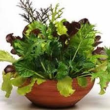 garden seed. Gourmet Mixed Lettuce Greens - Organic Garden Seeds 1 Lb Bulk Non-GMO Seed Y