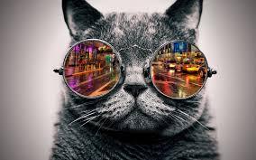 猫のサングラスの動物壁紙