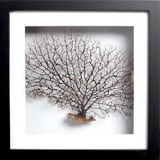 natural sea fan framed