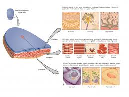 Classification Of Covering And Lining Membranes Complete The Following Chart 4 1 Types Of Tissues Anatomy Physiology