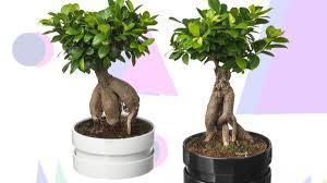 Best Ikea Plants Succulents Pots Planter Stands
