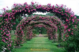 garden flowers. Image May Contain: Plant, Flower, Outdoor And Nature Garden Flowers