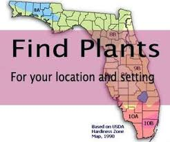 Trees Of Antiquity Heirloom Fruit Trees For Your HomeFruit Trees For North Florida