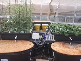 Tilapia Aquaponics Designs Bioenergy Research Group