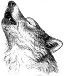 wolf howling drawing head.  Head Wolf Drawing  Google Search With Wolf Howling Drawing Head O
