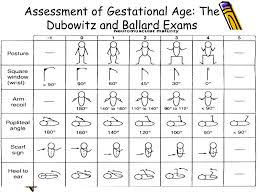 Ppt Assessment Of Gestational Age Powerpoint Presentation
