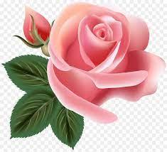 Pink Flower Cartoon png download - 6000*5429 - Free Transparent Centifolia  Roses png Download. - CleanPNG / KissPNG