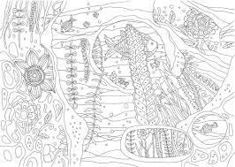 南の島の楽園の海をイメージした魚たちが泳ぐ海中の塗り絵です