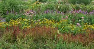Image result for wisconsin prairie flowers