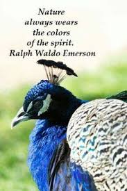 Peacock Beauty Quotes Best of Pin By Florence And Joseph McGinn On Education Learning Tips