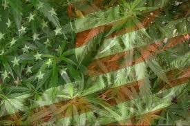 us weed