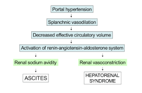 Pathophysiology Of Liver Cirrhosis In Flow Chart Hepatorenal Syndrome Wikipedia