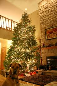LOVE the huge Christmas Tree! I can't wait for a pine smelling house