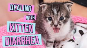 Kitten Diarrhea Color Chart Diarrhea Kitten Lady