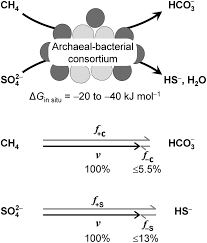 Carbon And Sulfur Back Flux During Anaerobic Microbial