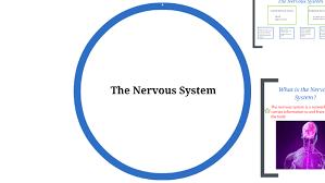 Central Nervous System Vs Peripheral Nervous System Venn Diagram The Nervous System The Brain Nature Vs Nurture By Jordan Potts On
