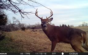 Where Does A Buck Bed Top 10 Spots Whitetail Habitat