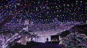 White Led Tree Lights Everything You Need To Know About White Wire Led Christmas