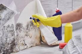 how to remove mold from walls true value