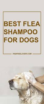 what to look for in flea shampoo
