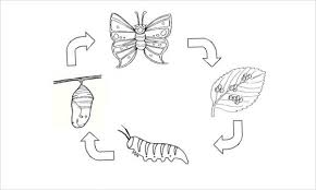 Butterfly Life Cycle Coloring Page 9 butterfly coloring pages free & premium templates on what page template is applied wordpress