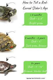 Turtleholic Officialturtleholic On Pinterest